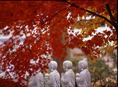 徳蔵寺の紅葉